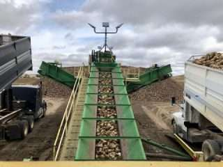 Piling Machine at the Sugar Beet Harvest