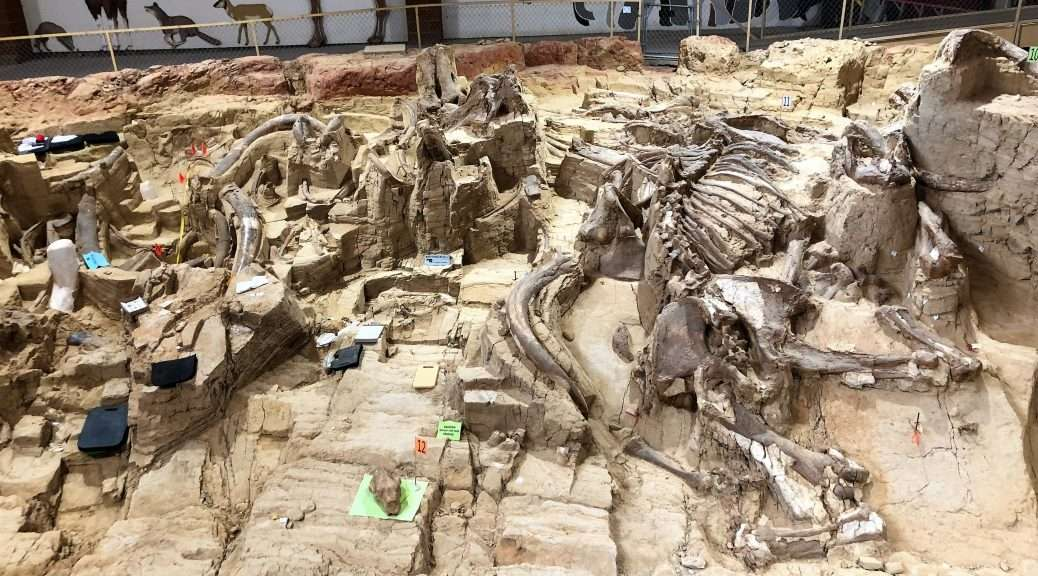 Mammoth Dig Site